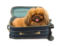Dog in suitcase heading to the San Juan Islands
