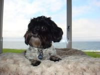 Q & A about Pet Friendly Travel to Friday Harbor